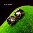 Kolczyki Nehesi,Kolczyki,ze Srebra,perły,sztyfty